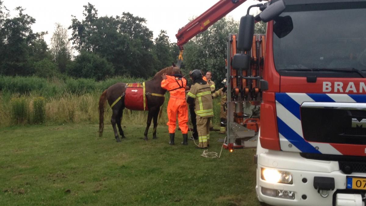 Brandweer haalt paard uit het water in Goudriaan - ZHZActueel